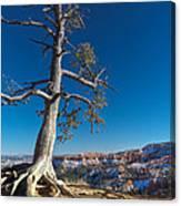 Bryce Tree Canvas Print
