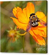 Bubble Bee Canvas Print