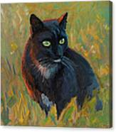 Bubu In The Sunset Canvas Print
