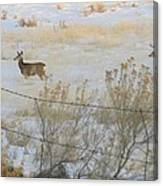 Buck And Doe Canvas Print