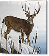 Buck At Waters Edge Canvas Print