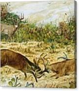 Buck Fight Canvas Print