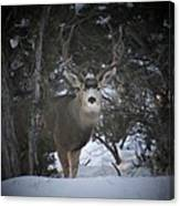 Buck I Canvas Print