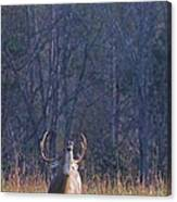 Buck In The Rut Canvas Print