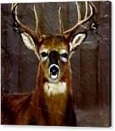 Buck On Slate  Canvas Print