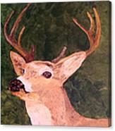 Buck Portrait Canvas Print