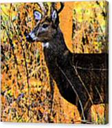 Buck Scouting For Doe Canvas Print