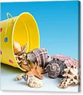 Bucket Of Seashells Still Life Canvas Print