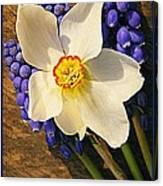 Buckeye And Grape Hyacinth Canvas Print