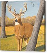 Bucky The Deer Canvas Print