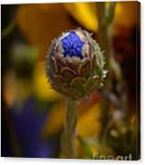 Bud Blooming Canvas Print
