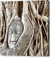 Buddha Head In Tree Wat Mahathat Ayutthaya  Thailand Canvas Print