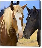 Buddies Wild Mustangs Canvas Print