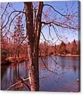 Budding Spring Tree Canvas Print