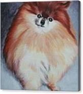 Buddy - Pomeranian Canvas Print