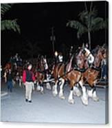 Budwiser Clidsdale Horses Canvas Print