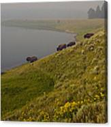 Buffalo   #0237 Canvas Print