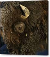 Buffalo   #5601 Canvas Print
