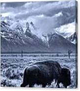 Buffalo And Mountain In Jackson Hole Canvas Print