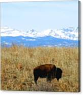 Buffalo And The Rocky Mountains Canvas Print