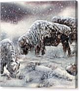 Buffalo In Snow Canvas Print