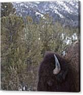 Buffalo In The Mountain   #4169 Canvas Print
