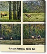 Buffalo National River Elk Canvas Print