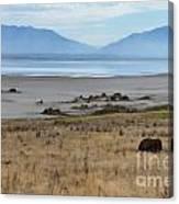 Buffalo Of Antelope Island V Canvas Print