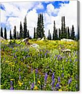 Buffalo Pass Colorado Wildflowers Canvas Print