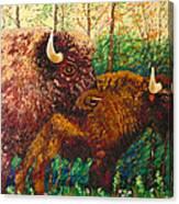 Buffaloes Canvas Print
