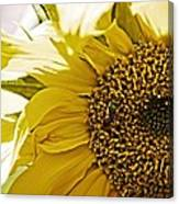 Bug In The Sunflower Canvas Print