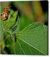 Bug On Leaf Canvas Print