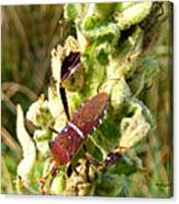 Bug On Stalk Of The Wooly Mullein Canvas Print