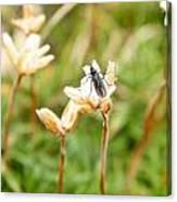 Bug On White Flower Canvas Print