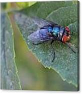 Bugging Me Canvas Print