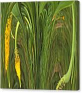 Bulbinella Latifolia Abstract Canvas Print
