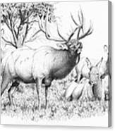 Bull And Harem Canvas Print