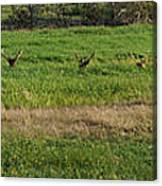 Bull Elk At Dean Creek Canvas Print