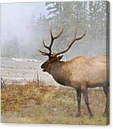 Bull Elk Bugles Loves In The Air Canvas Print