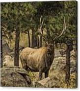 Bull Elk In Forest Canvas Print