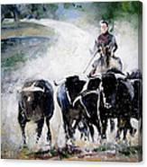 Bull Herd Canvas Print