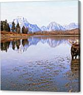 Bull Moose Grand Teton National Park Wy Canvas Print