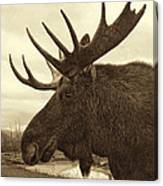 Bull Moose In Sepia Canvas Print