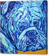 Bulldog Blues Canvas Print
