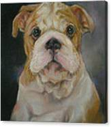 Bulldog Puppy Canvas Print