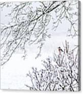 Bullfinch On A Snowy Branch Canvas Print