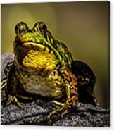 Bullfrog Watching Canvas Print