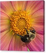 Bumble Bee Dahlia Canvas Print