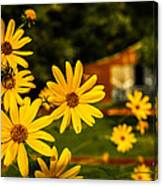 Bumble Bee On A Western Sunflower Canvas Print