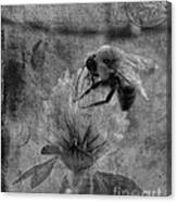 Bumble Bee Post Card 2 Bw Canvas Print